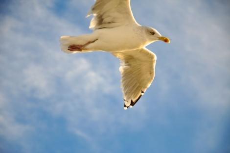 Norwegian Gull III